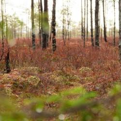 Colors of bog