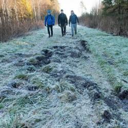 Wild boar activity