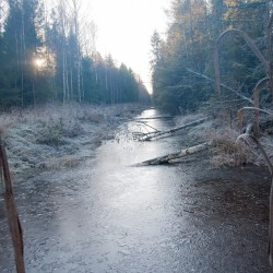 Traces of beaver activity